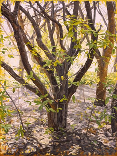 California Trees, Paintings and Woodcuts | Aaron Johnson